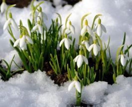Температурный рекорд в Европе: январь 2020 года стал самым теплым за всю историю наблюдений