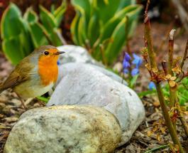 Стать жаворонком под силу любой сове: советы для тех, кто хочет легко просыпаться по утрам