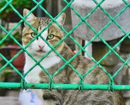 Уханьский герой: молодой волонтер Е Цзялин спасает от голодной смерти домашних животных