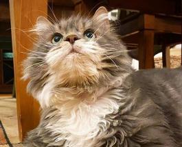 12-килограммового кота посадили на диету: животное должно сбросить половину веса