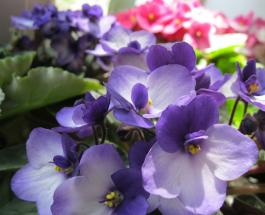 Какие цветы можно поливать жёсткой водой из-под крана без вреда для их красоты и здоровья