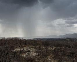Погода в Австралии: дождь может потушить все пожары в Новом Южном Уэльсе
