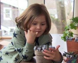 Глиняные коалы для спасения настоящих: необычное увлечение 6-летнего ребенка