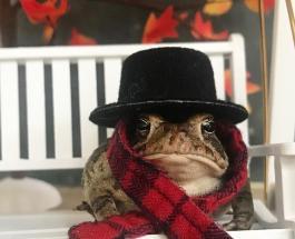 Самая популярная в мире лягушка: за жизнью Тоби в сети следят более 97 000 подписчиков