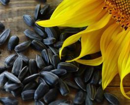 Когда семечки могут стать ядом, и в каком виде употреблять семена подсолнечника безопасно