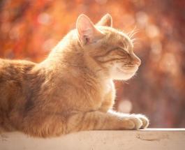 Забавные фото котов которым все равно где и как спать