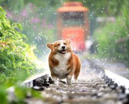 Смешные видео про собак которые развлекают себя и хозяев как умеют