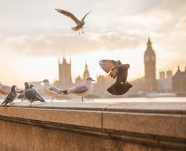 Городские птицы умнее, чем их собратья из сельской местности - новые исследования учёных