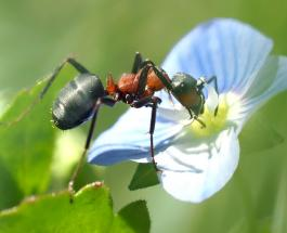 Как избавиться от нашествия муравьёв в доме и в саду: полезные советы