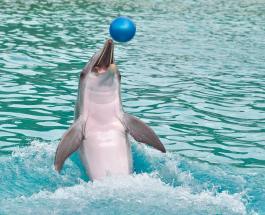В Канаде запретили использовать дельфинов и китов в развлекательных целях
