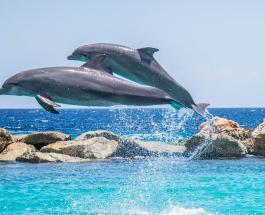 В Намибии расследуют причину странной гибели 86 дельфинов