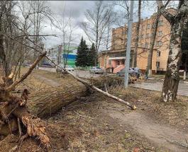 Ураган в Москве и области: не обошлось без человеческих жертв