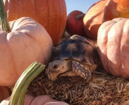Черепаха Этель стала звездой Сети благодаря ярким нарядам: забавные фото