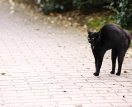 Пятница 13: суеверия, приметы и факты о дате, которую боятся люди