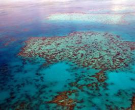 Третье обесцвечивание Большого Барьерного Рифа за пять лет: причина изменений