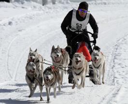 Соревнования по гонкам на собачьей упряжке выиграл участник из Норвегии