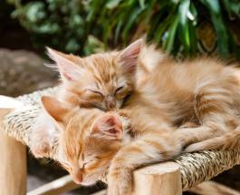Кошки могут предсказывать погоду: народные приметы и наблюдения