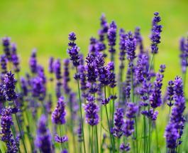 Знаете ли Вы: растения, использующиеся не только в народной, но и традиционной медицине
