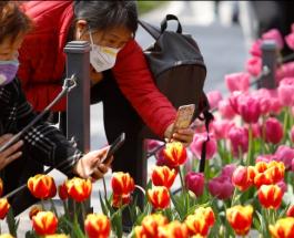 Люди в масках на фоне красивых цветов: в Китае начался сезон цветения тюльпанов