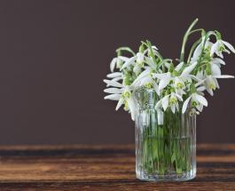 Как правильно хранить свежие цветы, чтобы они простояли как можно дольше: советы от флористов