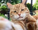 Кот Марли