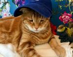 Кажется, эта кепка ему не нравится