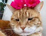 Даже цветы не радуют этого кота
