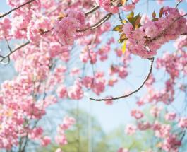 Благовещение Пресвятой Богородицы: традиции и приметы важного праздника