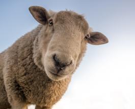 Забавные видео про животных у которых всегда хорошее настроение