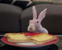 Кролик с необычной внешностью которого никто не хотел покупать стал звездой социальных сетей