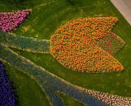 Впервые за 71 год в голландском саду Кёкенхоф нет посетителей: 22 фото красивых тюльпанов