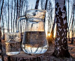 Когда собирать березовый сок, и чем природный напиток полезен для здоровья