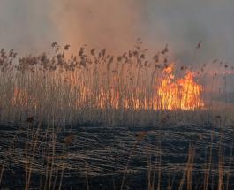 Сильный пожар уничтожает крупнейший природный заповедник Польши: фото и видео