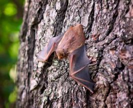 У летучих мышей обнаружено 6 новых типов коронавируса – исследование учёных из Мьянмы