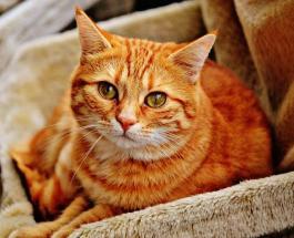 """Рыжий """"ждун"""": сеть умилили фото кота, наблюдающего за процессом ремонта любимой игрушки"""