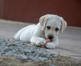 Топ-5 продуктов, полезных для организма людей, но очень вредных для здоровья собак