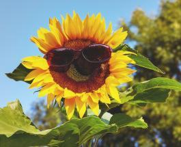 Знаете ли Вы: почему эксперты не советуют носить солнцезащитные очки ранним утром