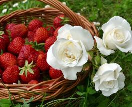 Чем полезна клубника и как сохранить ягоды неиспорченными как можно дольше