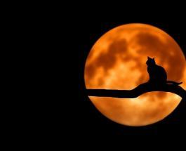 Тест-предсказание: выбранная Луна расскажет, чего ждать в будущем