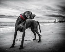 8 новых пород собак, о которых многие еще не слышали