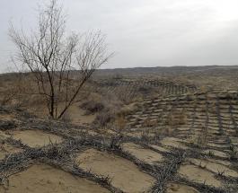 На северо-западе Китая исчезла огромная пустыня: невероятное преображение безжизненного пространства