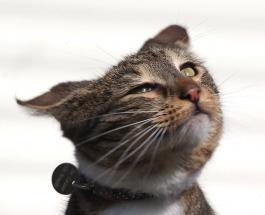 Самый активный кот: фото полосатого непоседы прожившего короткую жизнь