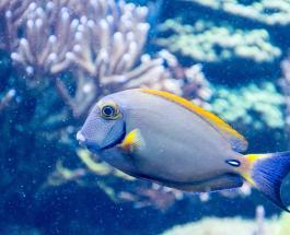 Вязаный аквариум: итальянка сделала удивительный проект из пряжи