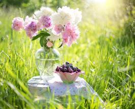 Символ счастья и благополучия: какой цветок должен чаще бывать в доме семейной пары