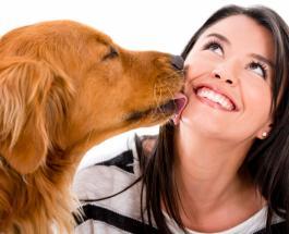 Как понять собаку по ее поведению: язык тела питомца может многое рассказать его хозяину