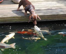 Можно ли кормить собак рыбой, и какие ее виды наиболее безопасны для животных