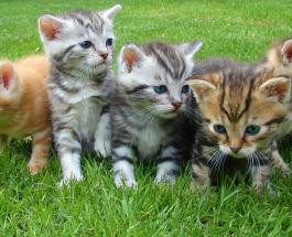 Как подружиться с кошкой: 10 способов наладить отношения с домашним животным