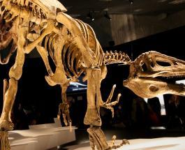 В Аргентине нашли окаменелости динозавра: их длина достигает 10 метров