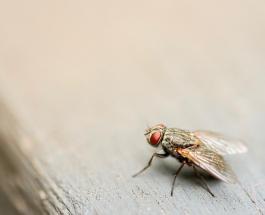 Знаете ли Вы: чем опасно для человека соседство с мухами
