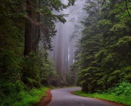 За последние 30 лет мир потерял 178 миллионов гектаров леса - отчет ФАО